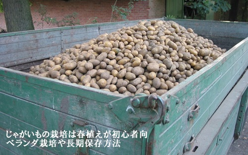 potatoes-16774_640