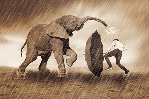 elephant-335754_640
