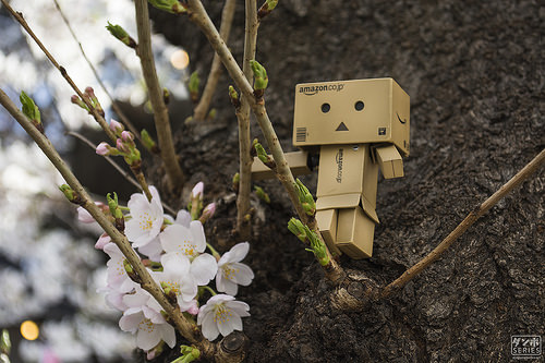photo credit: Danbo Kun Loves Sakura! via photopin (license)