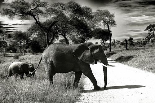 elephant-660058